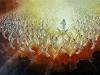 Пришествие Мессии